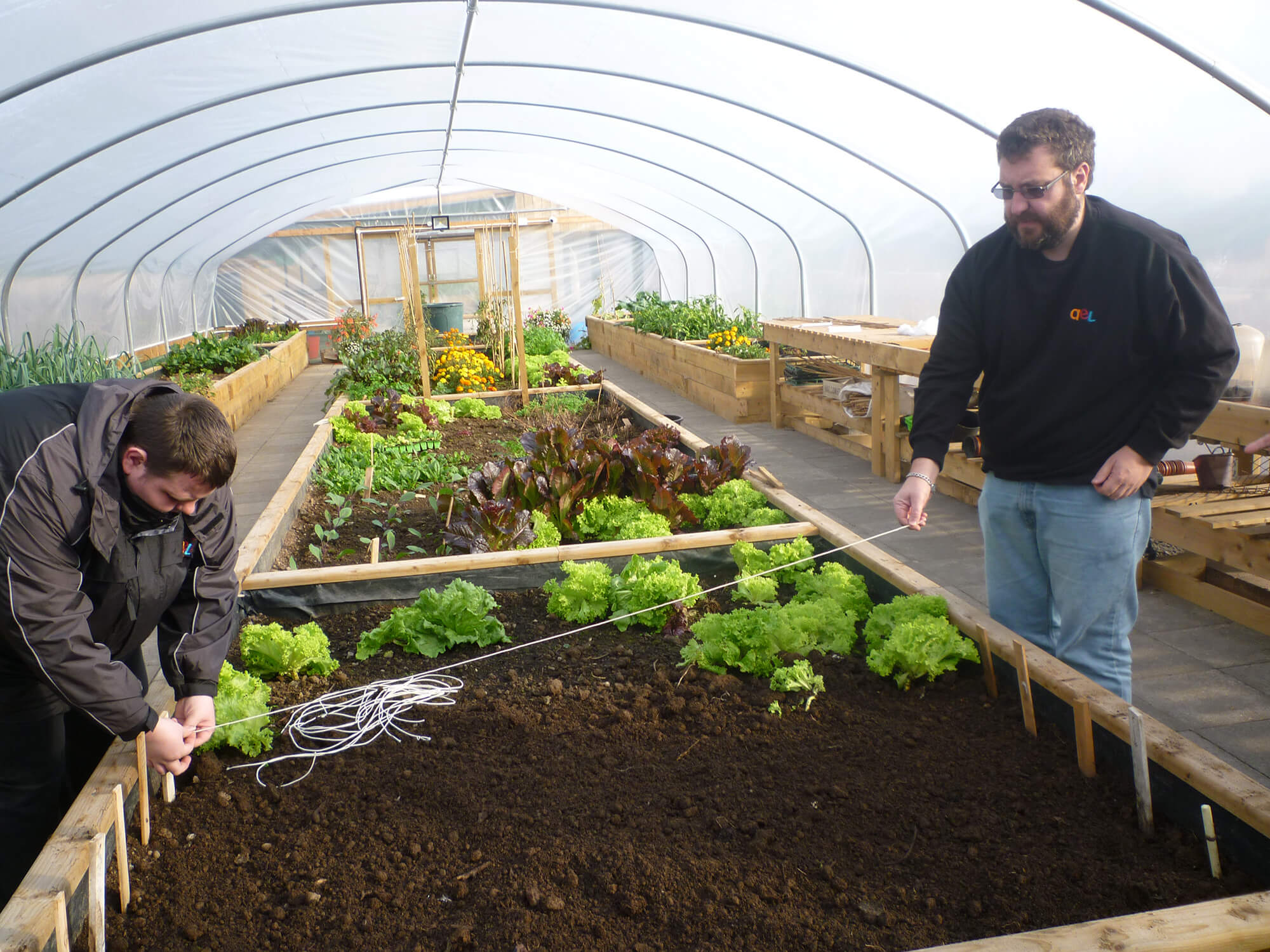 Tying up plants in the Greenhouse at AEL